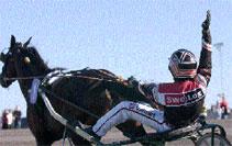 Månadens häst